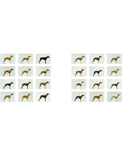 Jo Longhurst, <em>Twelve Dogs, Twelve Bitches</em>, 2003, 24 chromogenic prints, mounted on aluminium, each 609mm x 406mm, installation area 2 x 5 metres