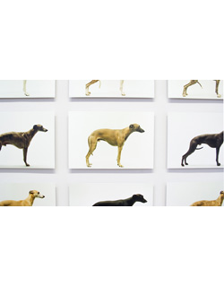 Jo Longhurst, Installation view: <em>Twelve Dogs, Twelve Bitches</em>, 2003, 24 chromogenic prints, mounted on aluminium, 609mm x 406mm, installation area 2 x 5 metres. Museum Folkwang, Essen, 2008