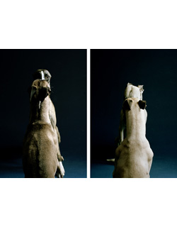 Jo Longhurst, <em>The Refusal (Part II)</em>, 2008, diptych: chromogenic prints mounted on aluminium, each 68.5cm x 101 cm