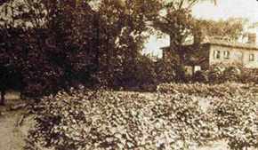 Unknown photographer, Garden around, 1900