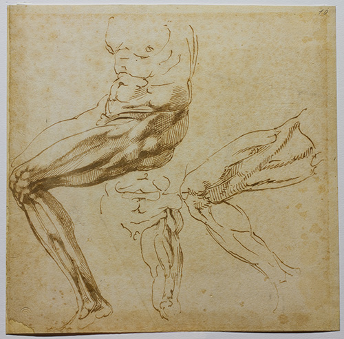 Michelangelo, Study of Legs