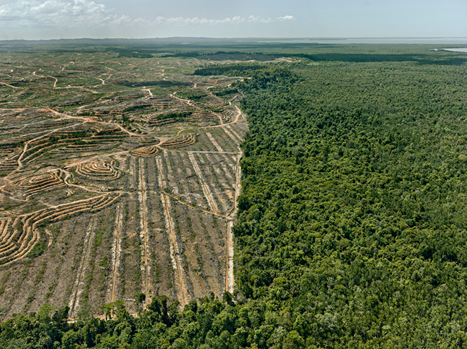 Clearcut #1, Palm Oil Plantation, Borneo, Malaysia by Edward Burtynsky