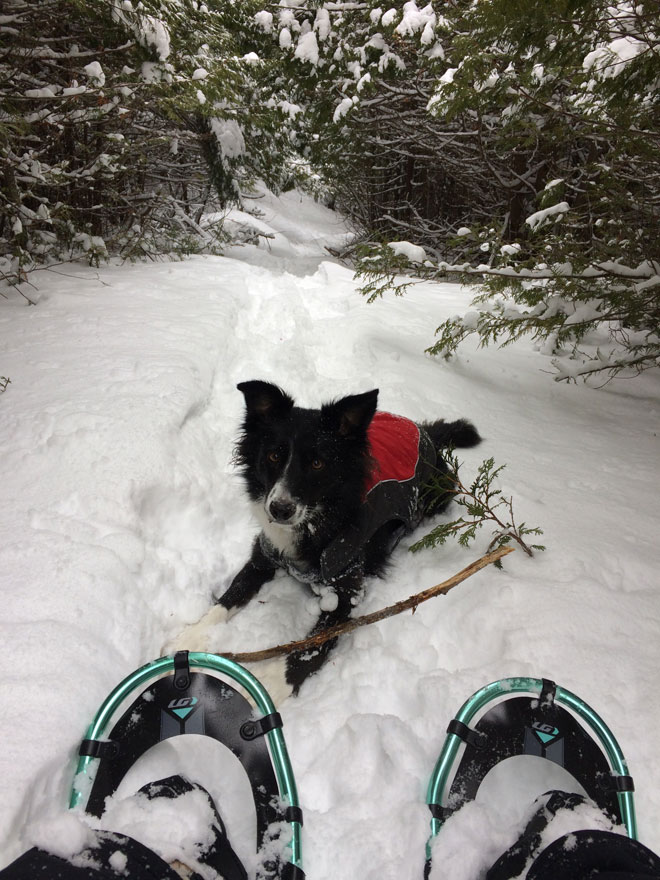 person wearng snow shoes and dog