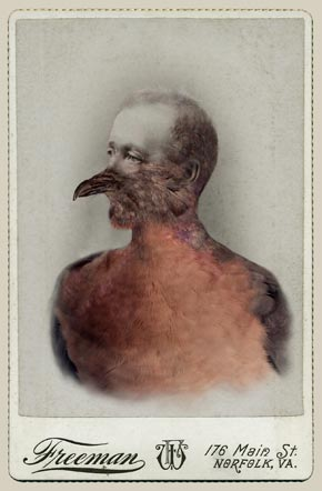 Sara Angelucci, Aviary (Male Passenger Pigeon/extinct), 2013