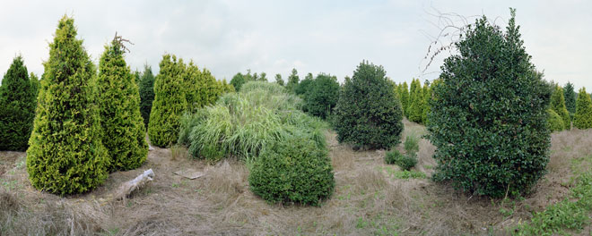 Scott McFarland, Verderber Landscape Nursery, Montauk Highway, Hampton Bays, New York, 2013