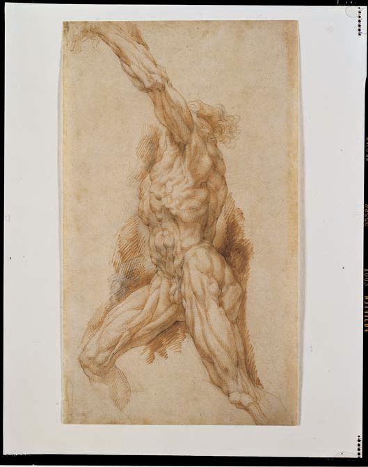 peter paul rubens anatomical study of a man reaching up to the left