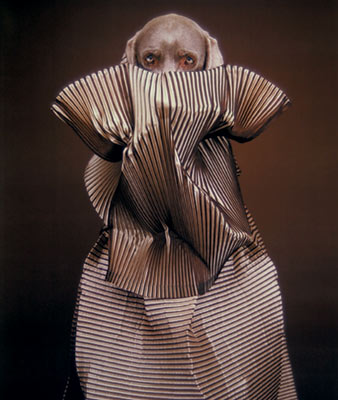 William Wegman: Fashion Photographs